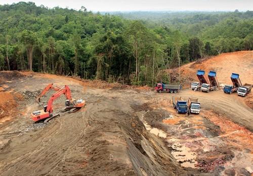 Danger of deforestation