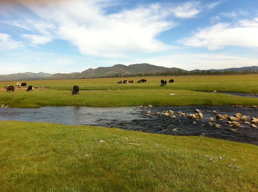 steppe mongole