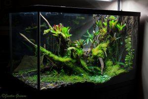 terrarium dendrobate jungle